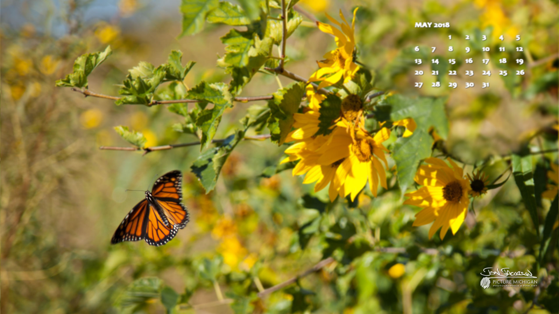May 2018 Desktop Calendar Wallpaper - Michigan Butterfly